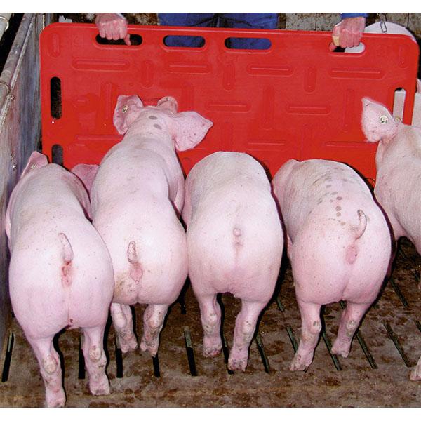 Utstyr i grisefjøsen